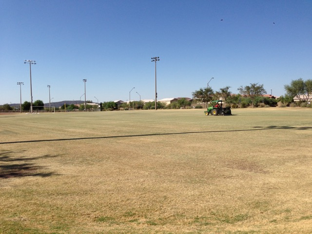 Overseeding Lawns in Anthem Parkside
